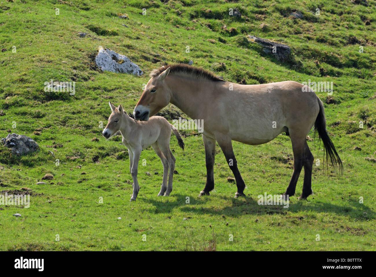 Newborn horse standing - photo#13