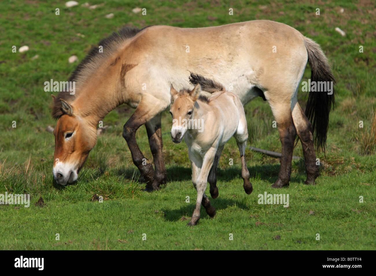 Newborn horse standing - photo#12