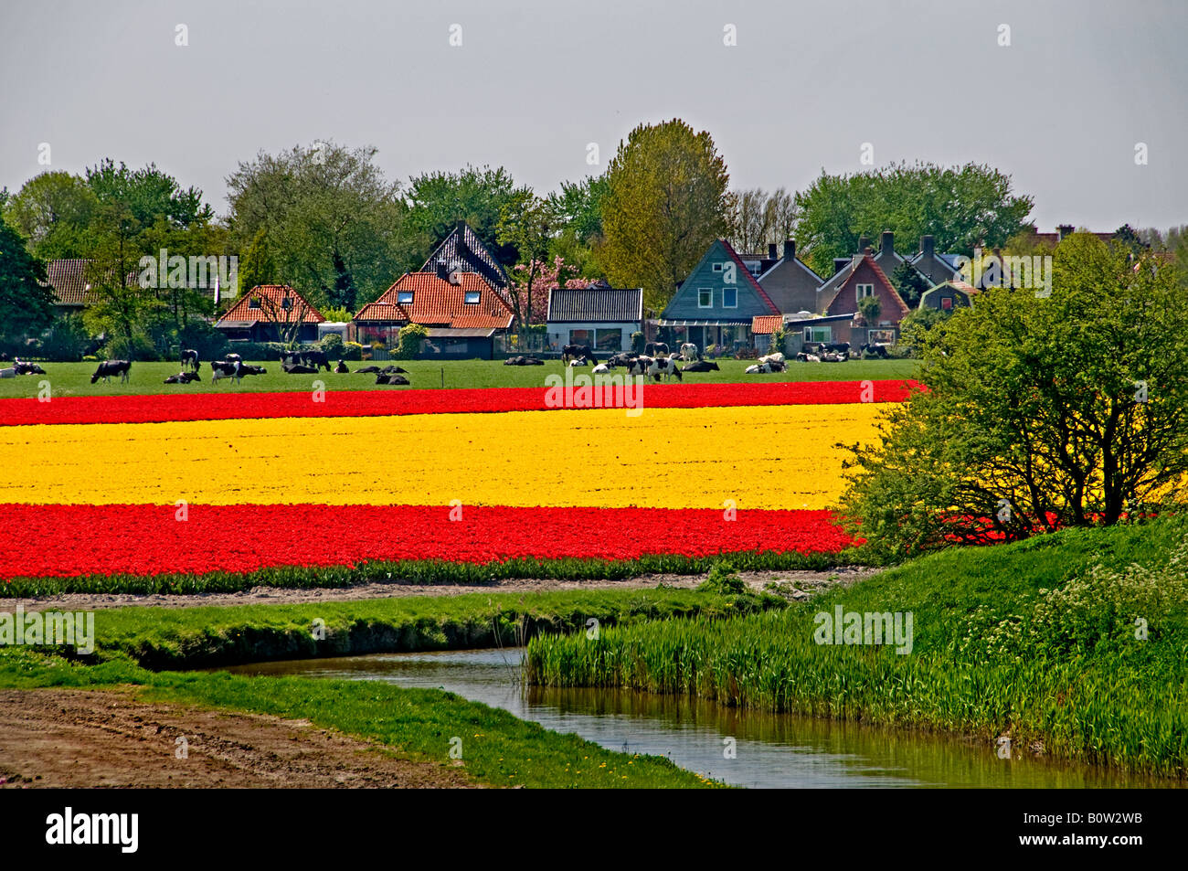Netherlands north holland dutch tulips bulbfields flowers for Farm house netherlands