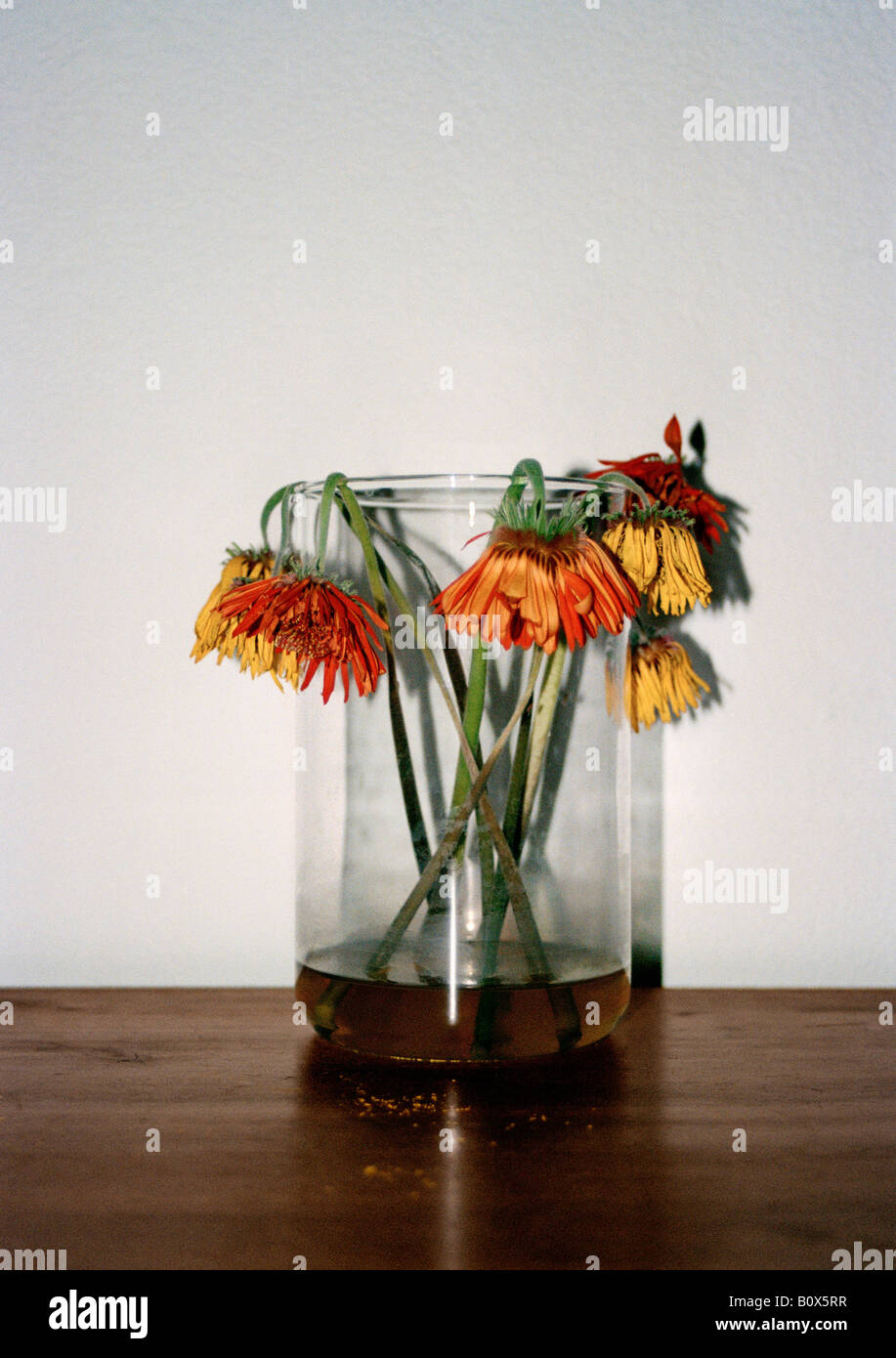 Wilting flowers in a vase stock photo royalty free image wilting flowers in a vase reviewsmspy