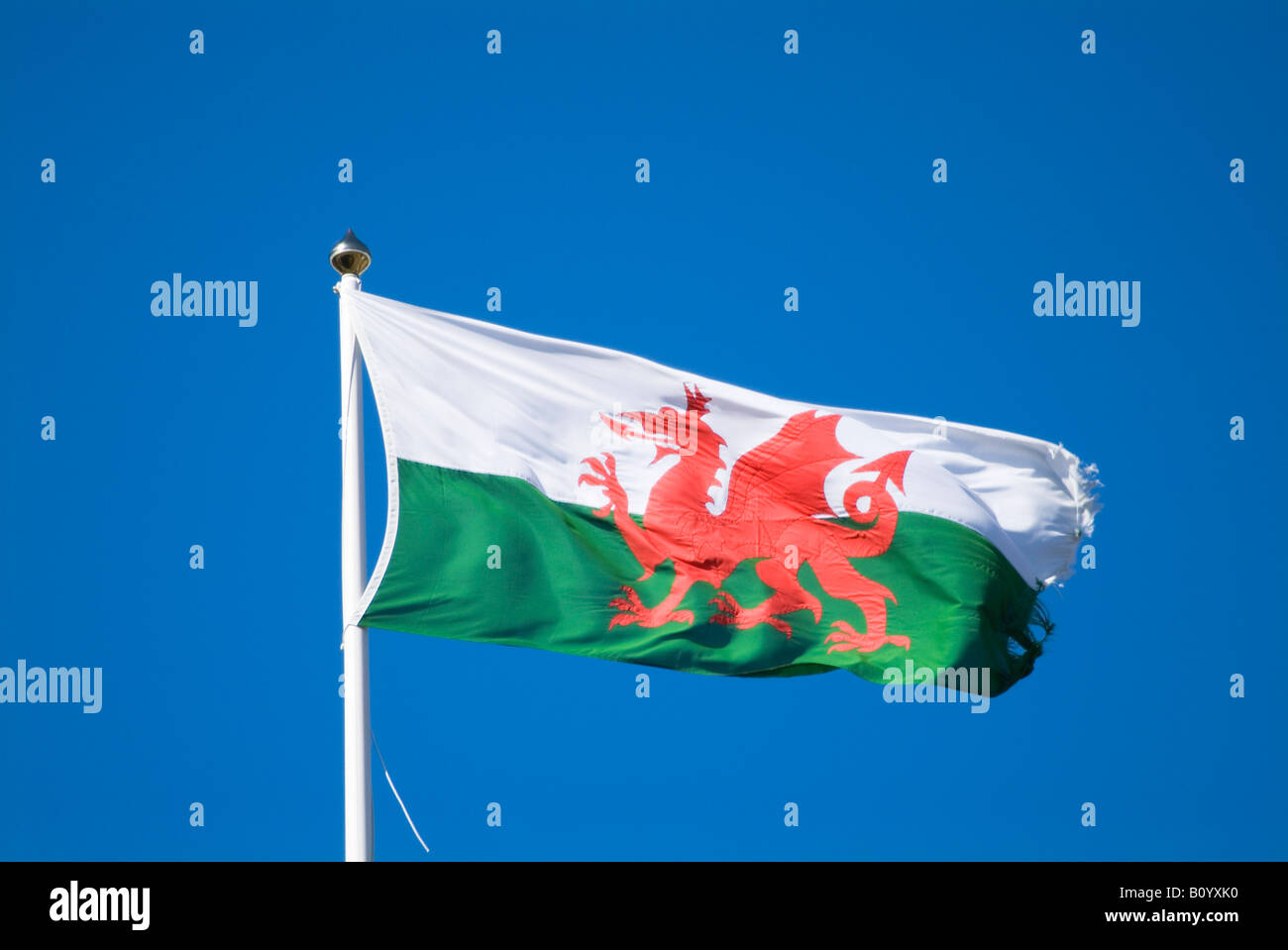 dh FLAG WALES Welsh official flag green and white red ...