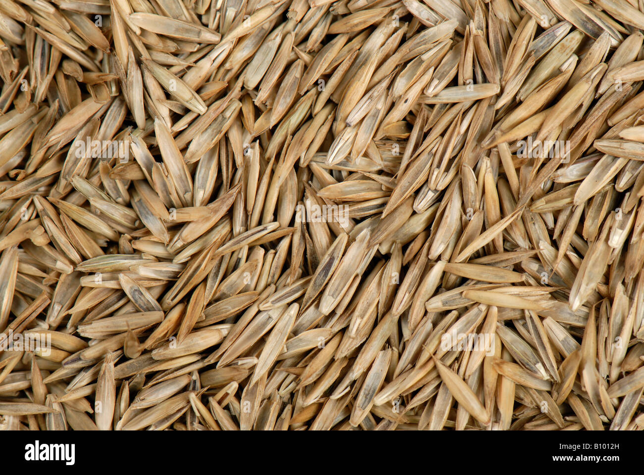 lawn grass seed including ryegrass lolium sp stock photo royalty free image 17825881 alamy. Black Bedroom Furniture Sets. Home Design Ideas