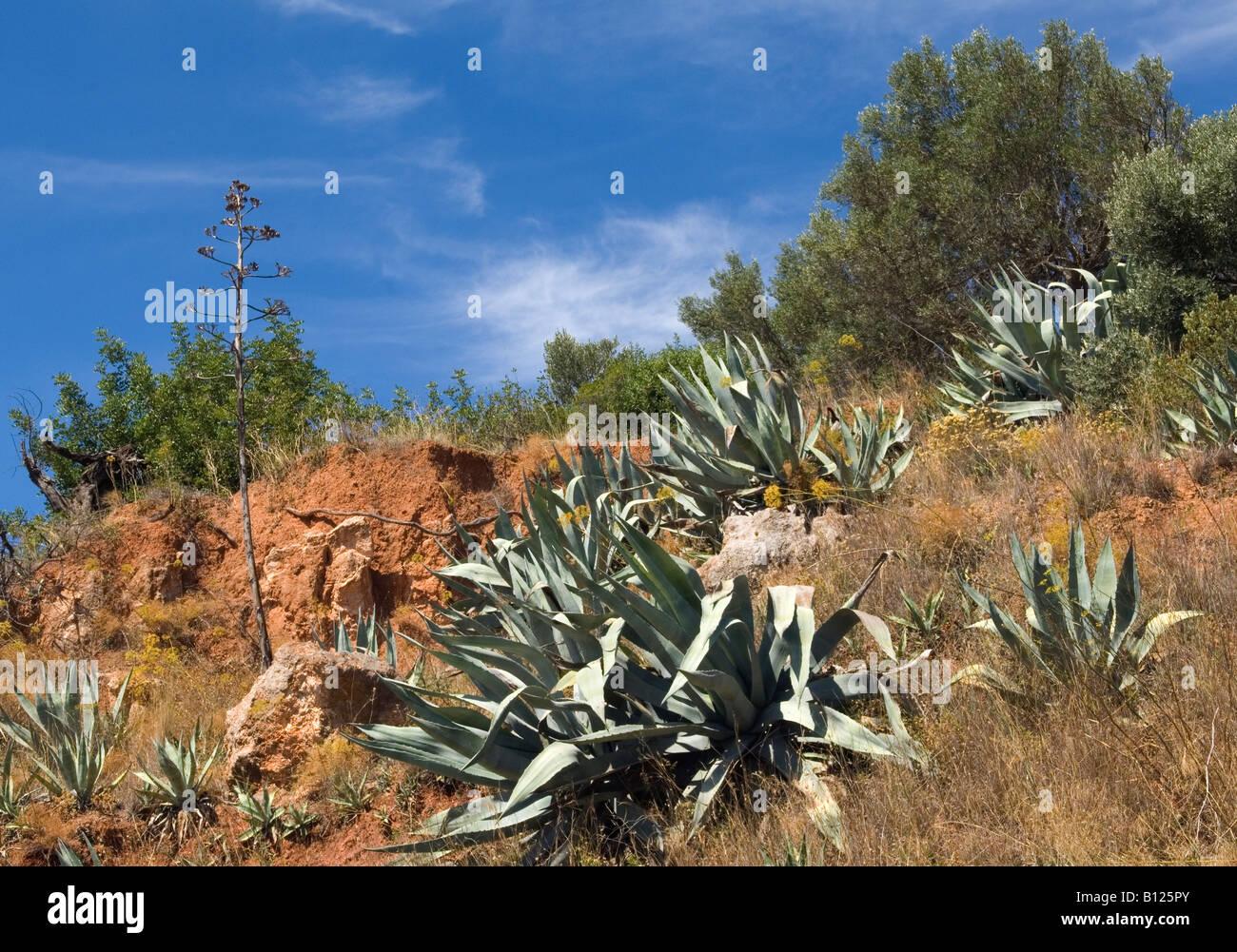Native Plants Portugal Stock Photo Royalty Free Image - Portugal vegetation map