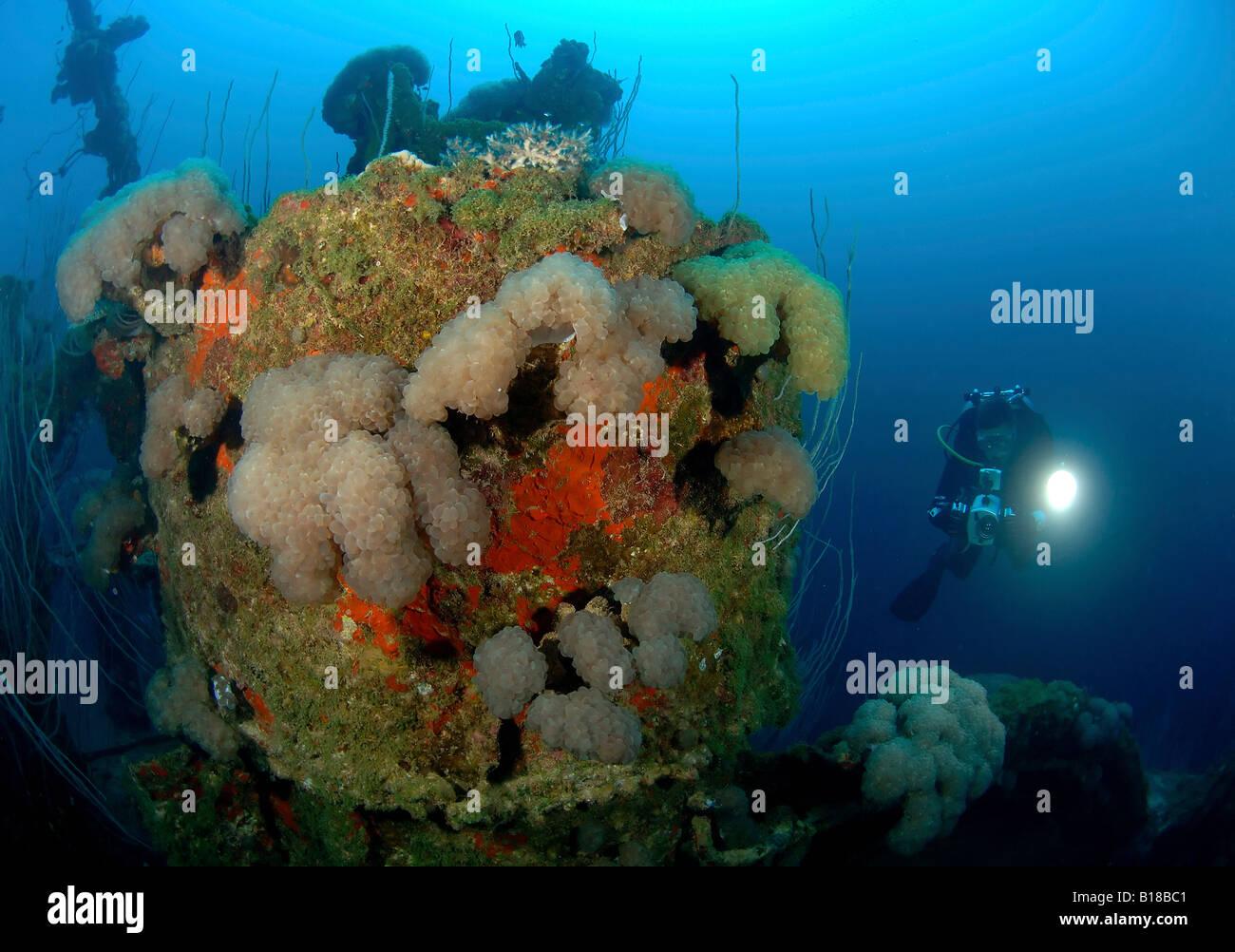 Journey to Bikini Atoll   X Ray Mag YouTube