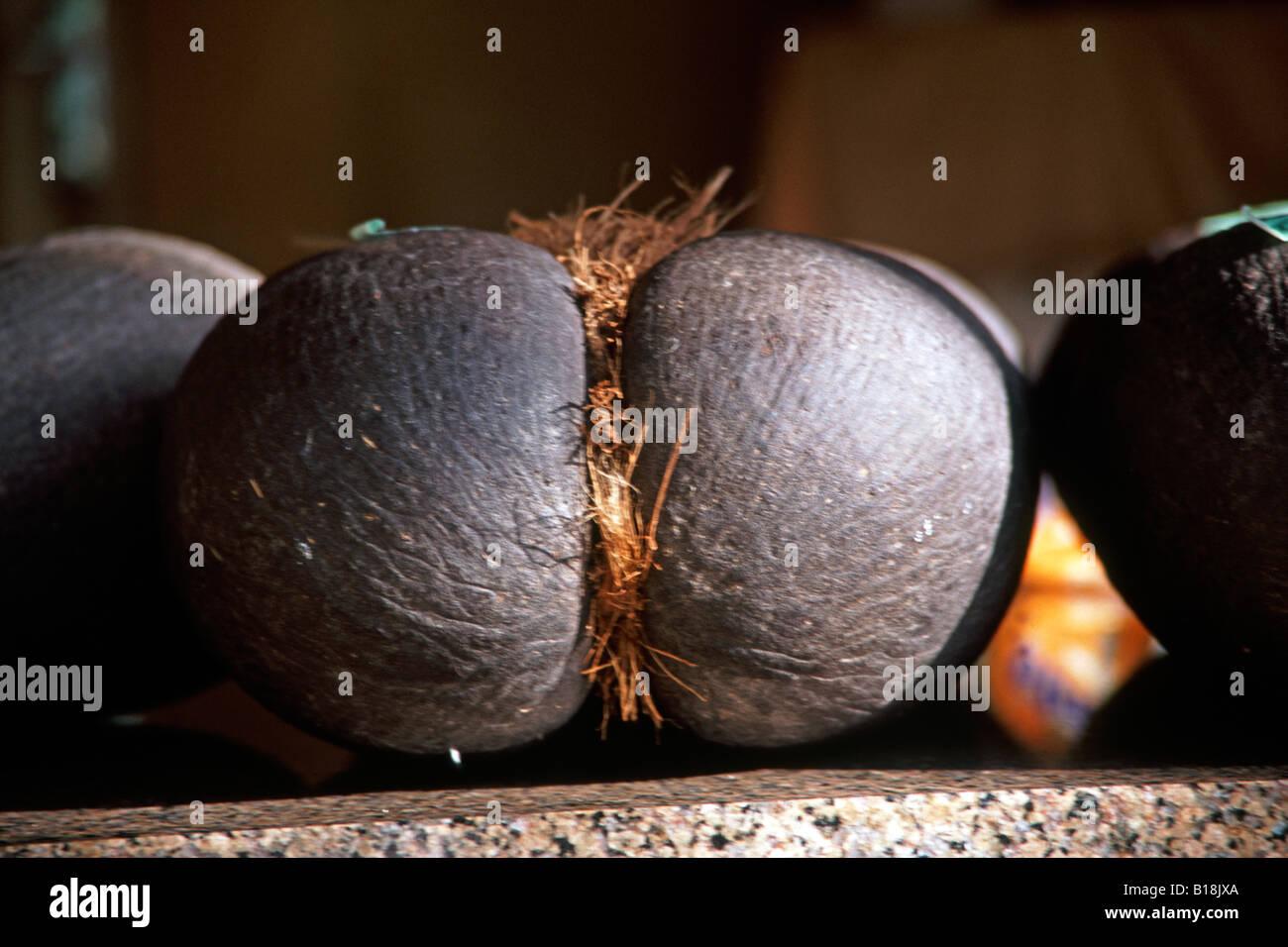 Coco De Mer Nut For Sale In Victoria Market Mahe Seychelles - Seychelles victoria map indian ocean