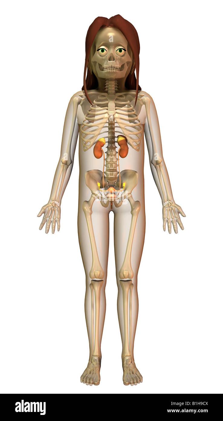 Anatomy of female sex organ slut
