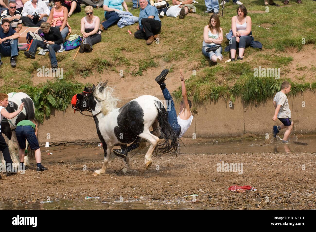 Gypsy Horse Fairs Stock Photos &amp- Gypsy Horse Fairs Stock Images ...