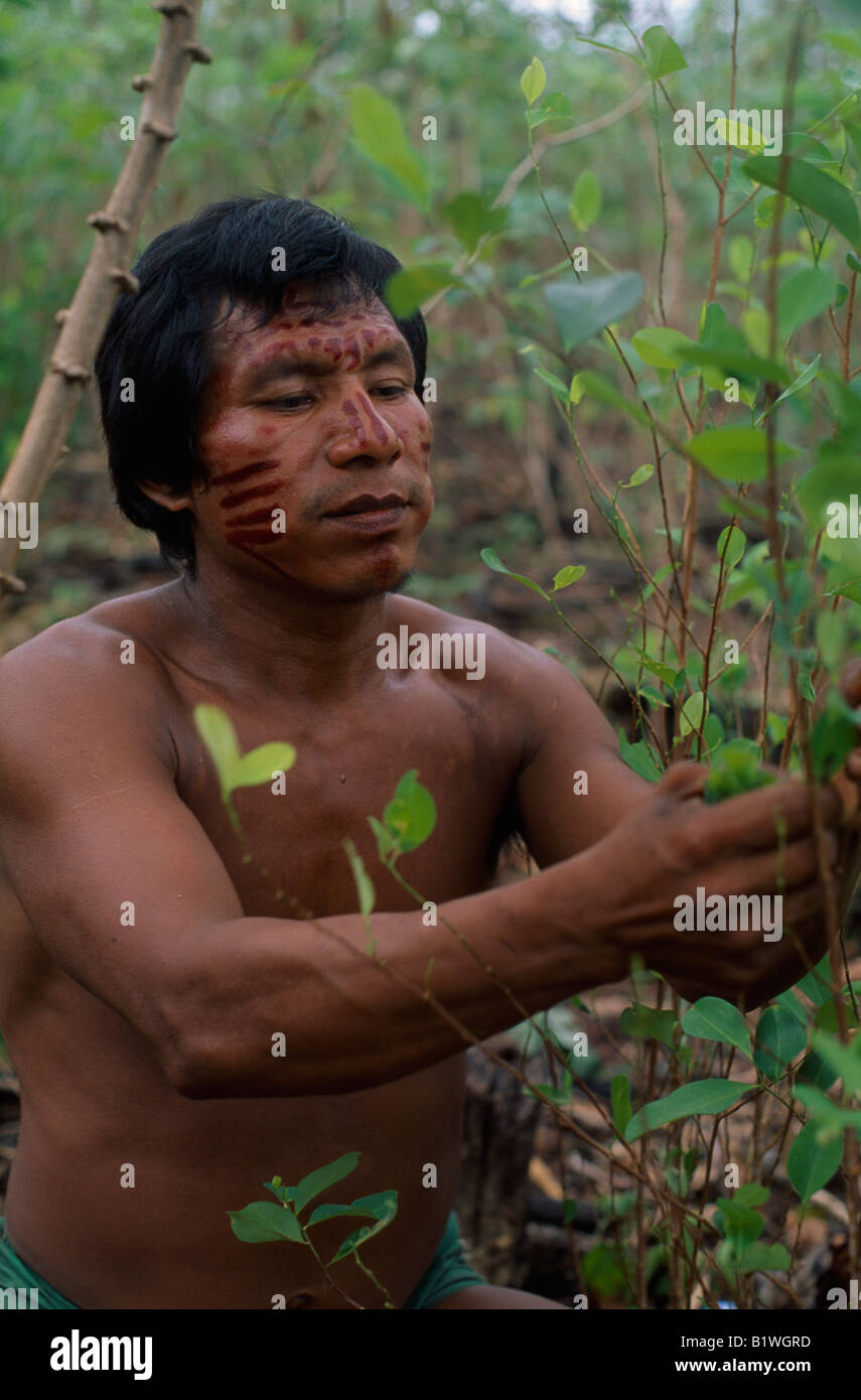 amazonia hispanic single men In some versions of the myth, no men were permitted to have sexual encounters or reside in amazon country but once a year, in order to prevent their race from dying out, they visited the.
