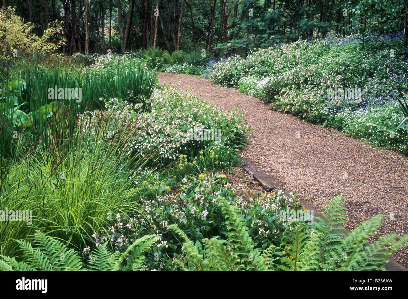Woodland Garden Pulmonaria Stitchwort Ferns Wave Garden Pensthorpe – Woodland Garden Plants