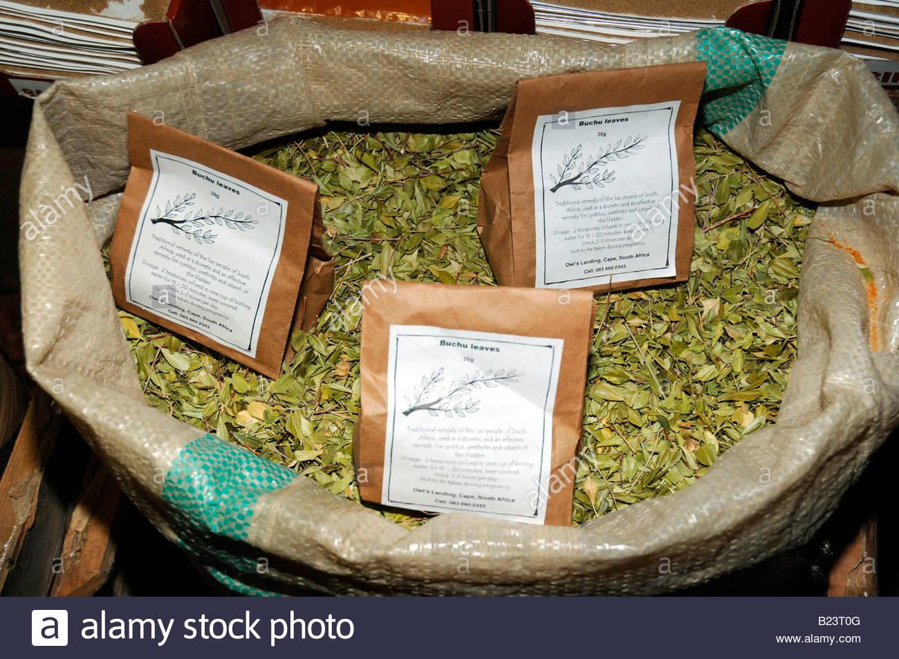 南非药用植物2:BUCHU(补护)保健茶 - 六一儿童 - 译海拾蚌