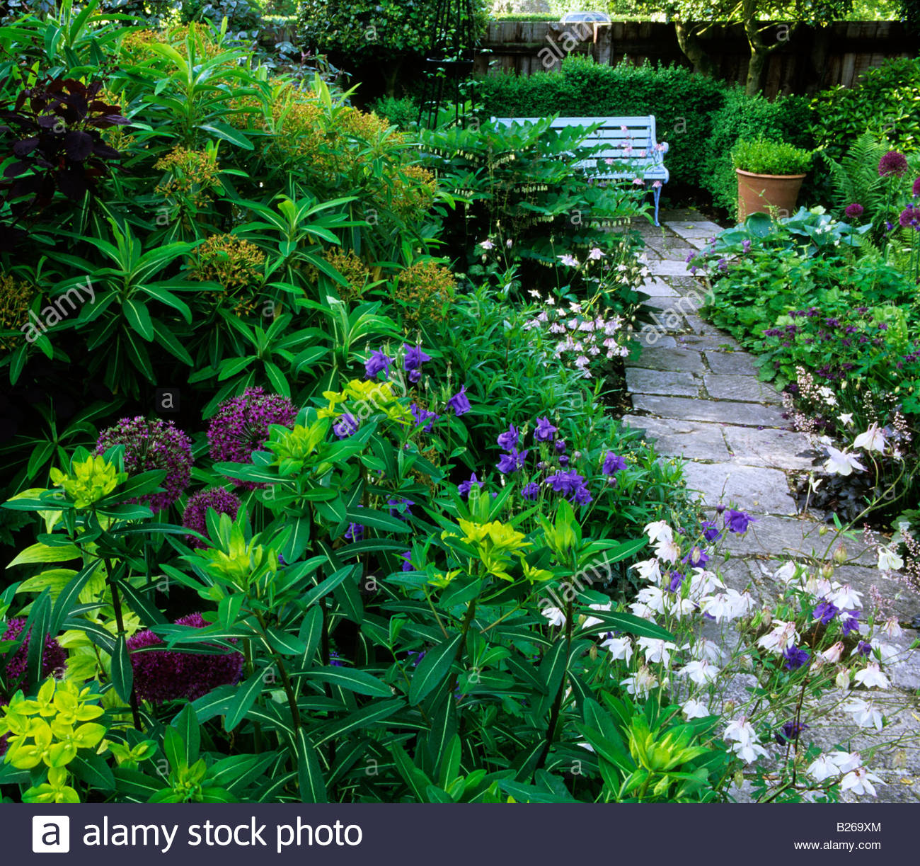Shade June Gardeners Cottage West Dean Sussex Shady Garden Euphorbia  Schillingii And Mellifera Allium Giganteum Cotinus Royal Pu