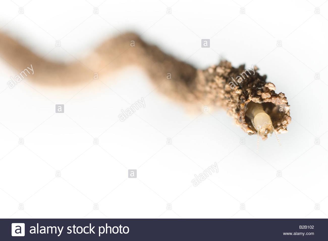 B And B Termites Stock Photo - Termites build a