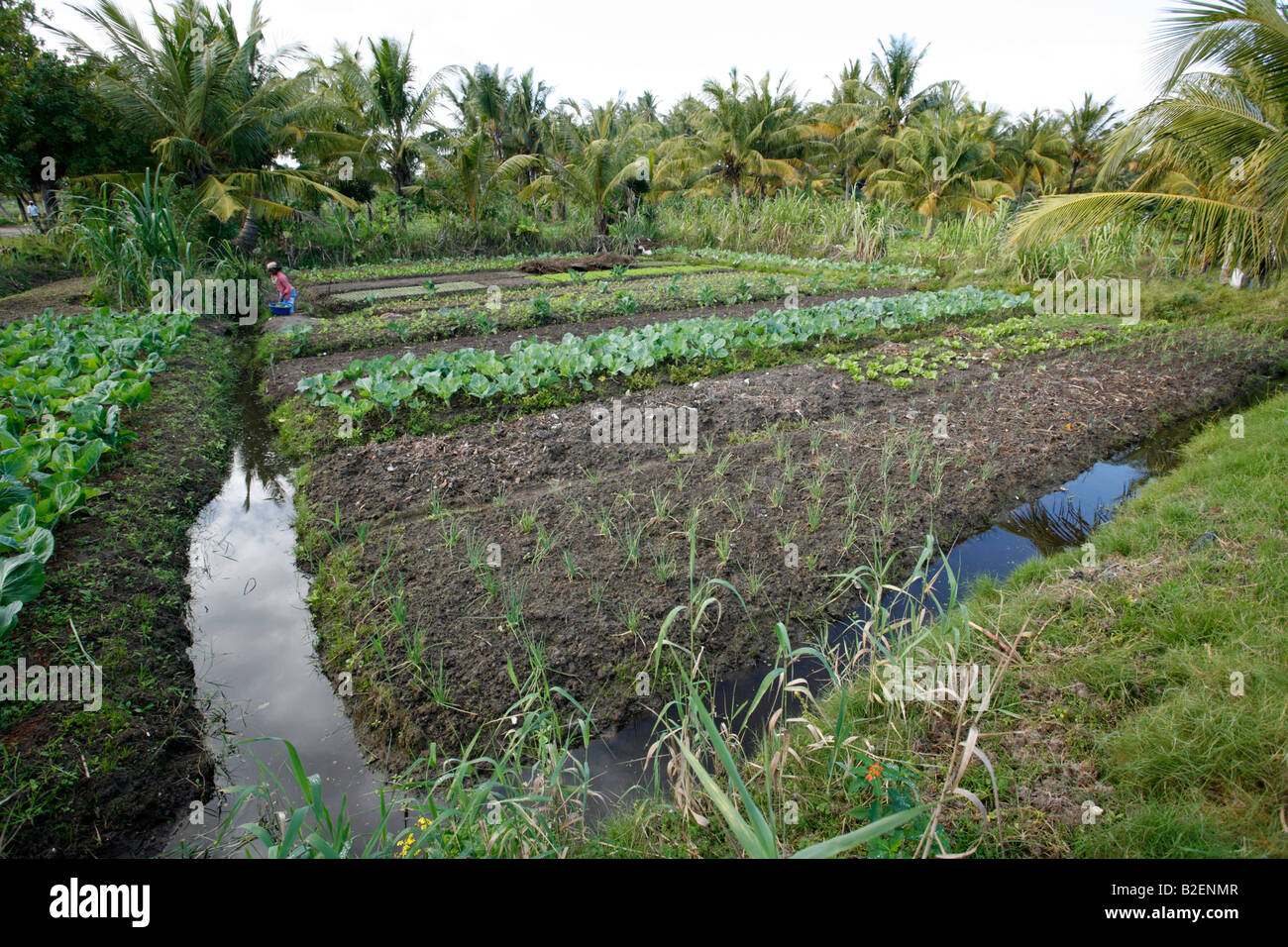 A Tending To Her Vegetable Garden With Furrow Irrigation