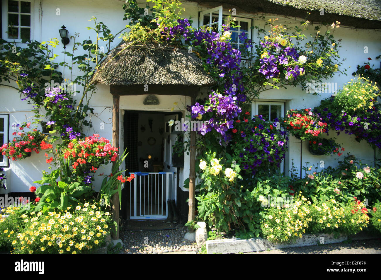 Beautiful White Painted Cob And Thatch Cottages With Summer Flower Display At Branscombe One Of The Longest Villages In Devon