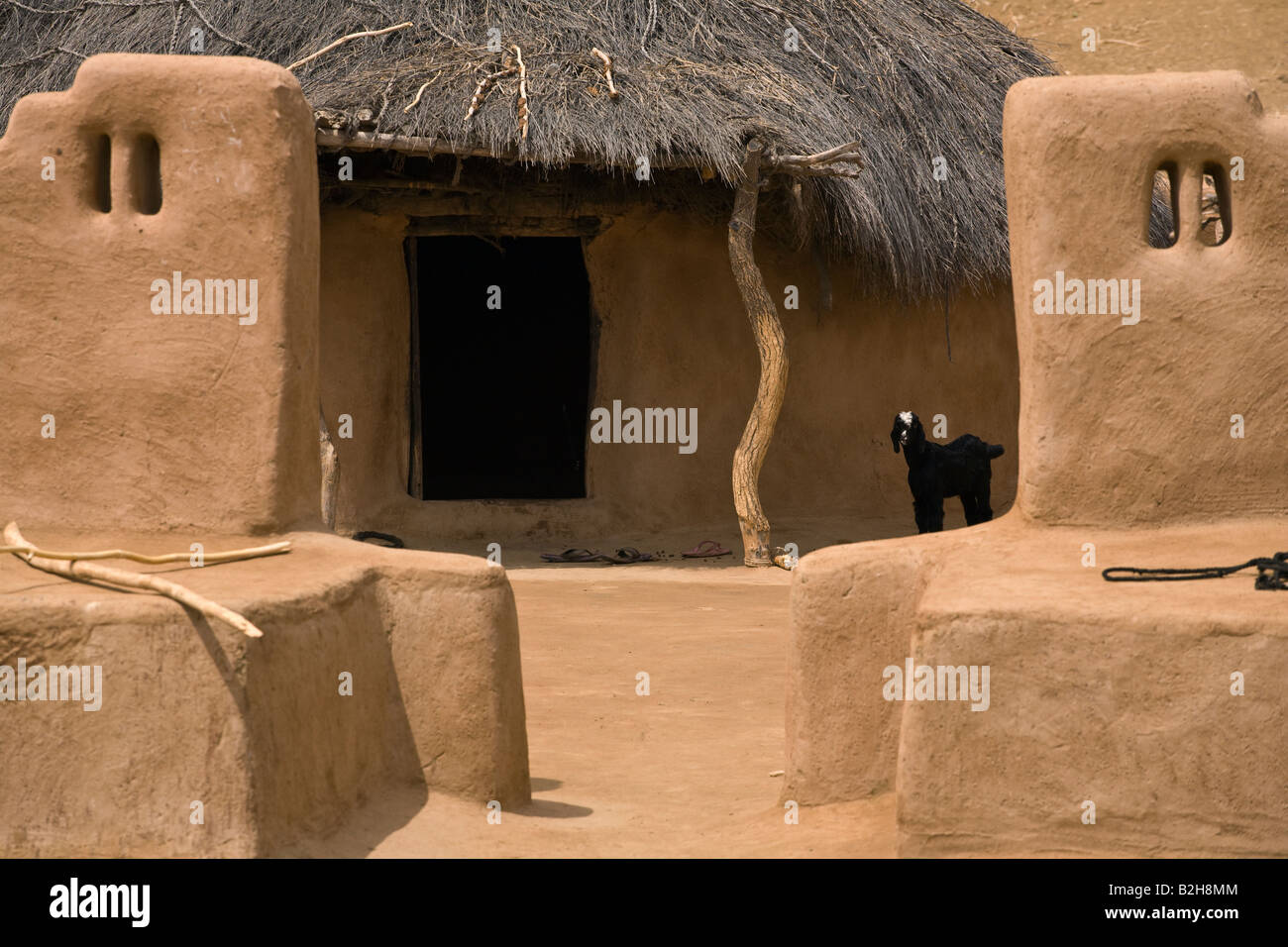 A classic mud house with a goat in the village in the thar desert near jaisalmer