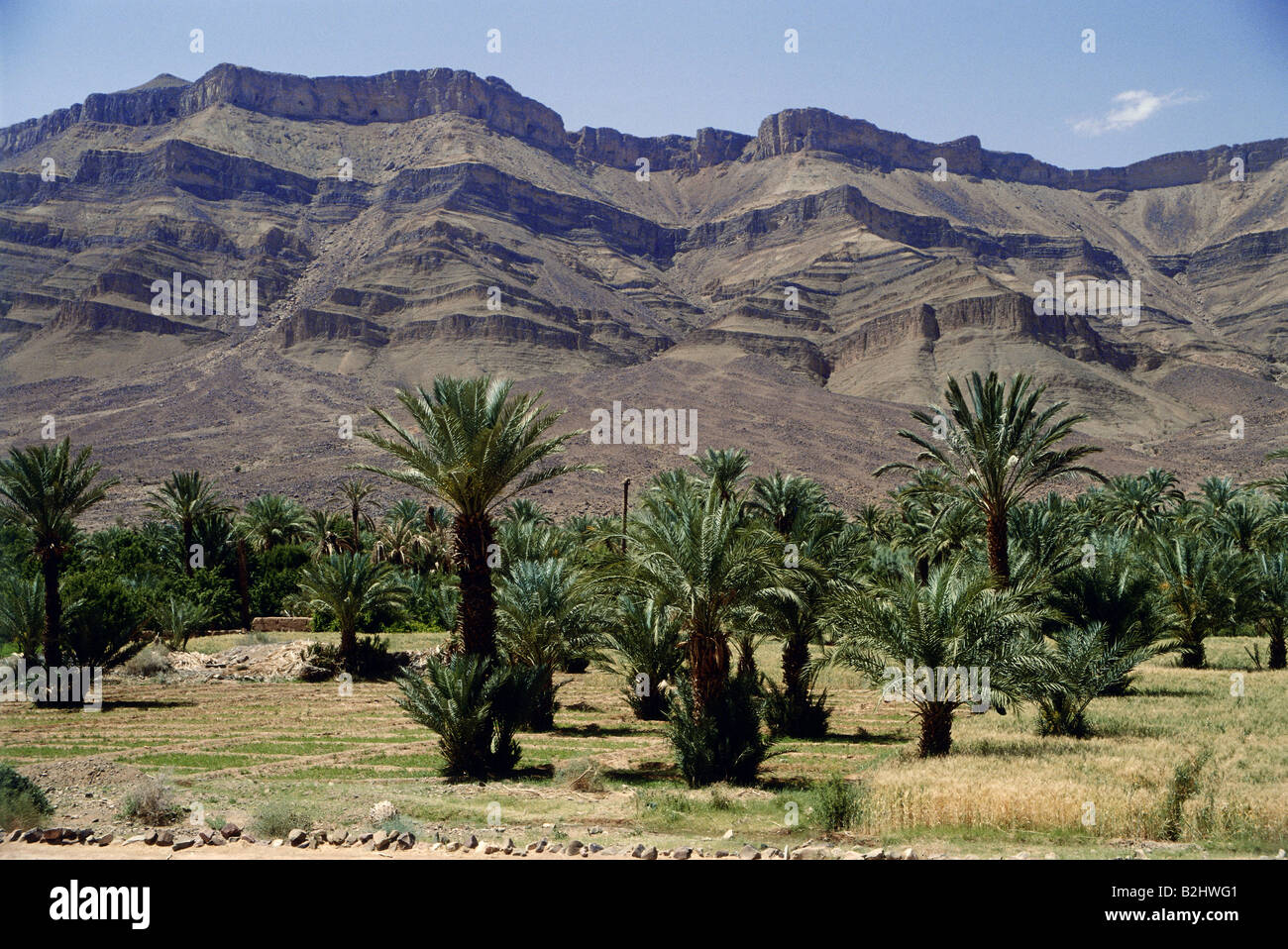geography / travel, Morocco, Draa valley, palms, oasis ... Oasis Geography