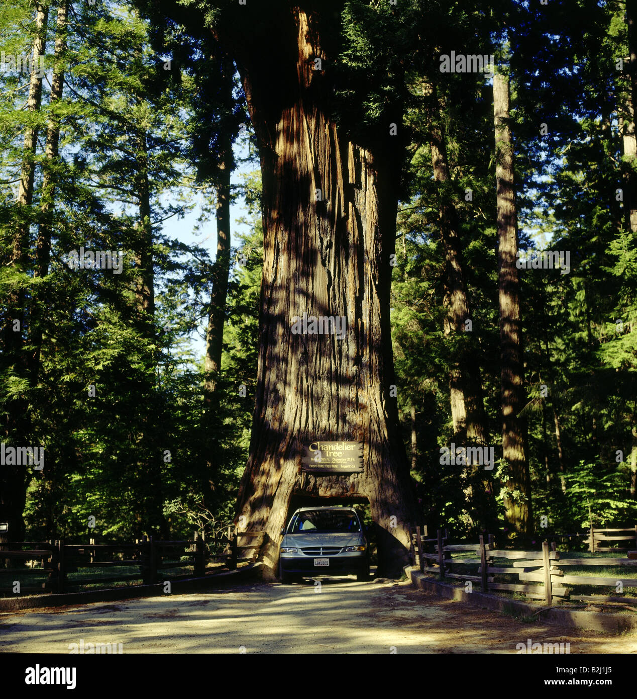 geography / travel, USA, California, landscapes, redwood tree ...