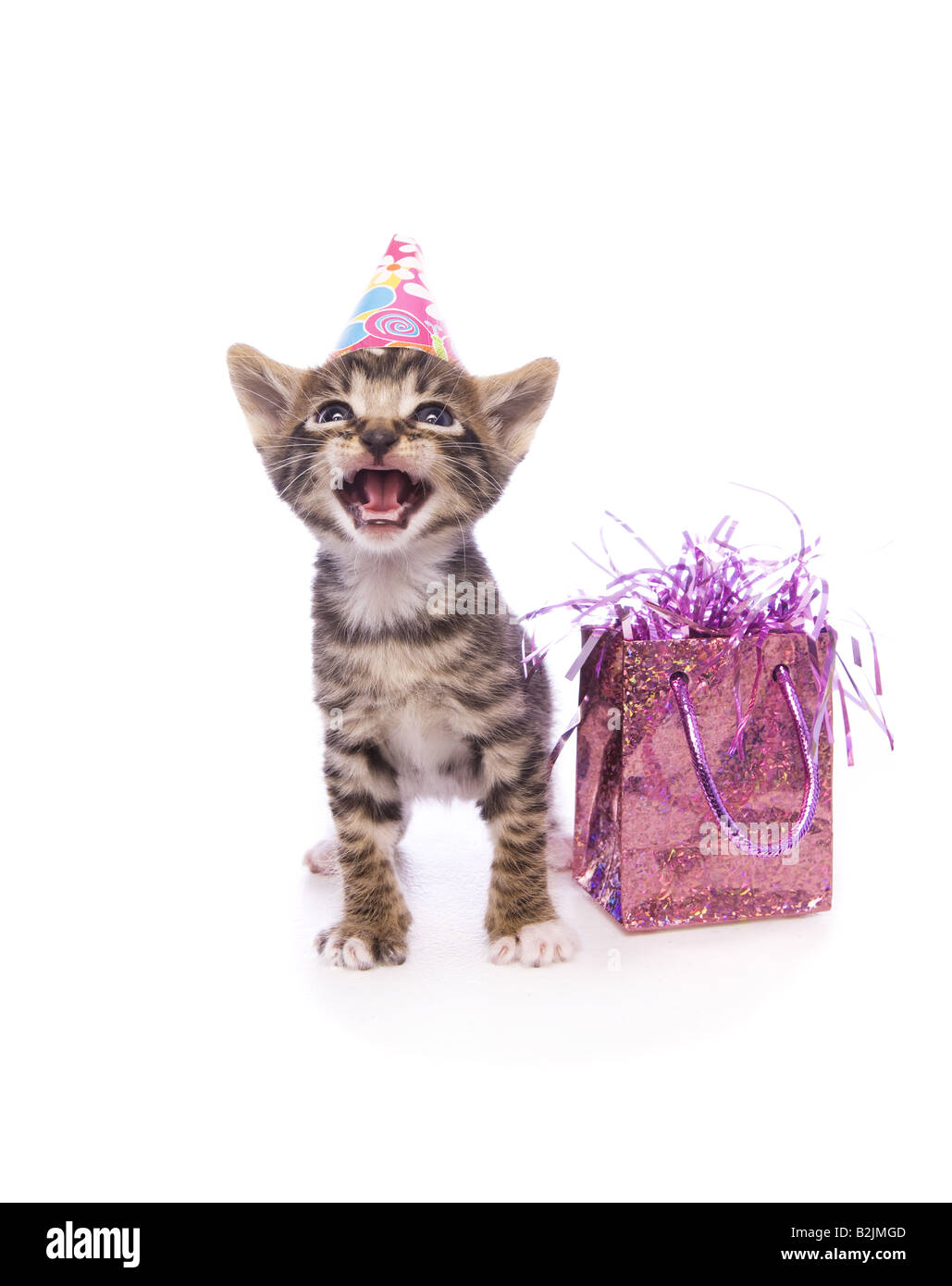adorable happy birthday kitten with mouth open wearing hat with