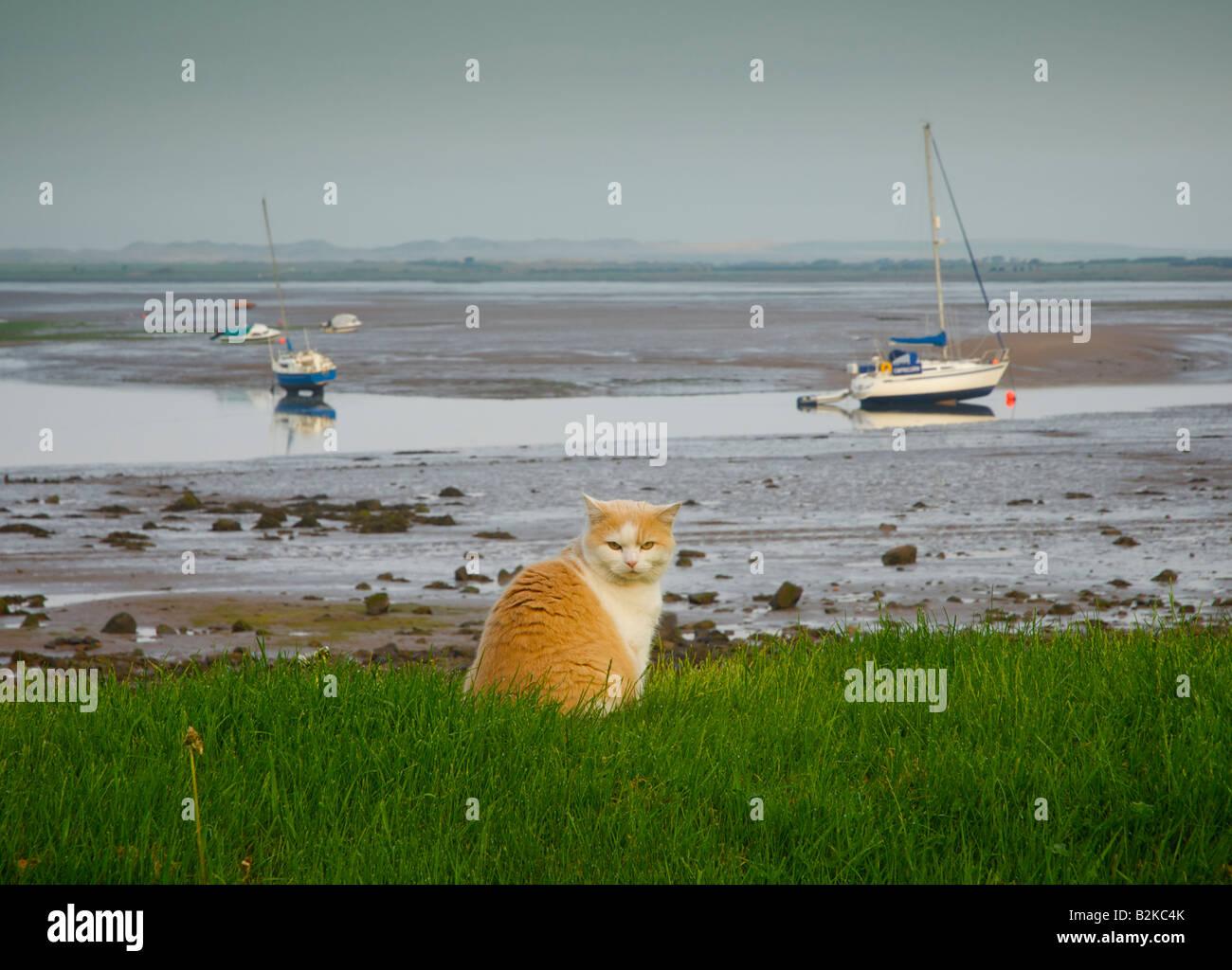 cat-sitting-on-grass-with-muddy-estuary-
