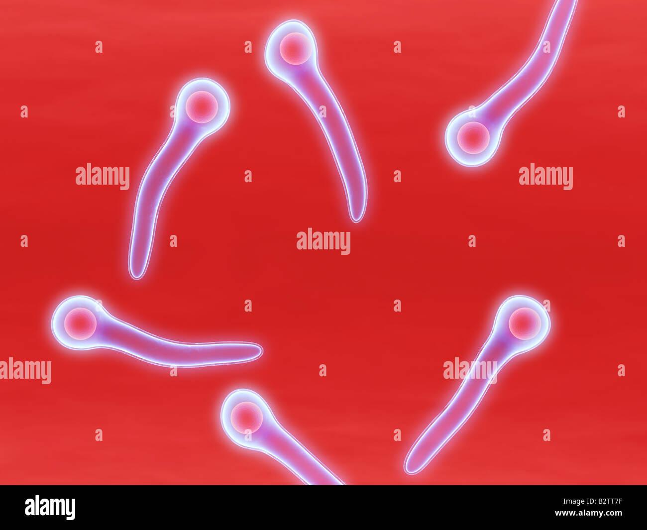 tetanus bacteria Stock Photo, Royalty Free Image: 18985555 ...