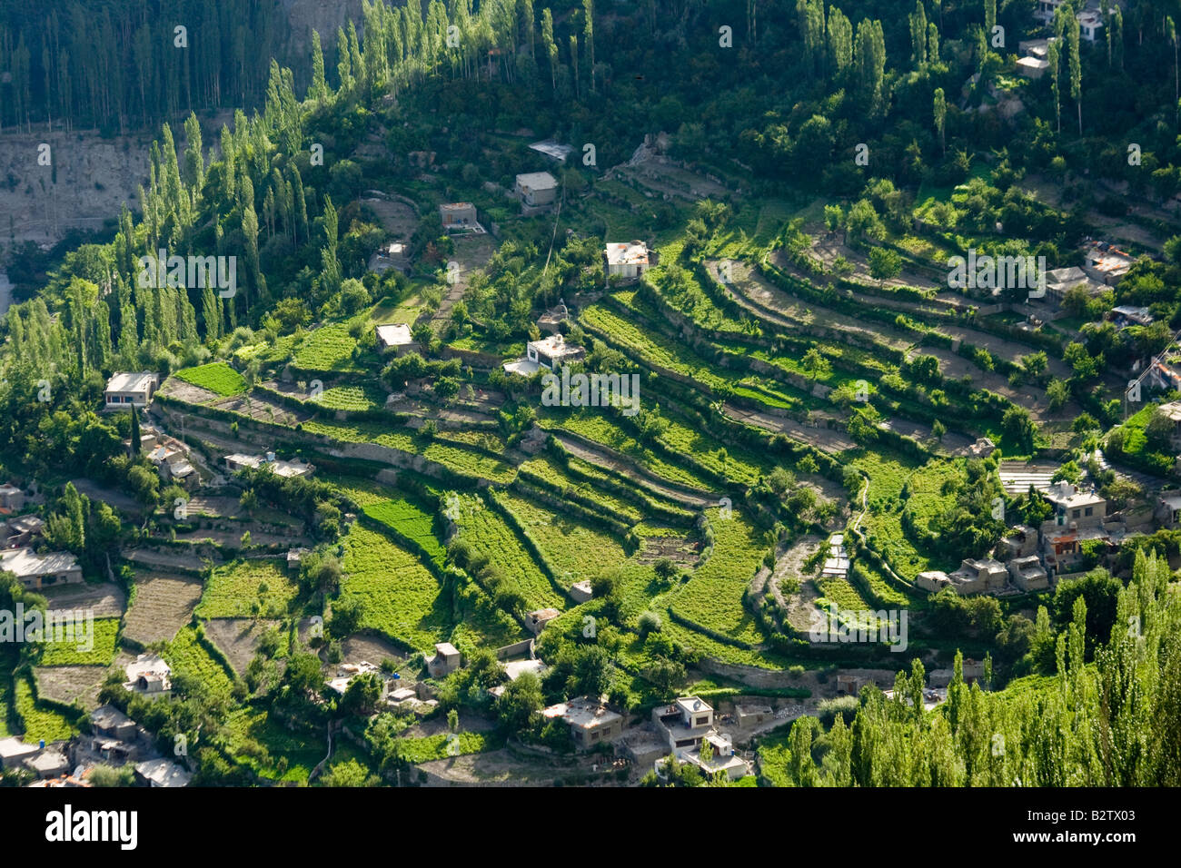 Terrace farming in karimabad in the hunza valley in for Terrace farming