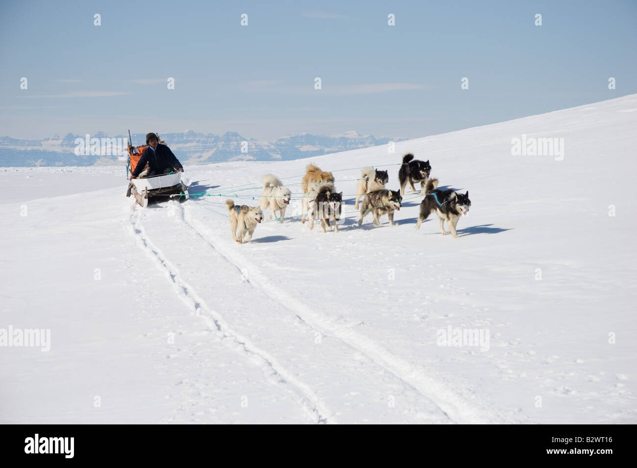 inuit hunter mushing his husky dog sled team across the ice near
