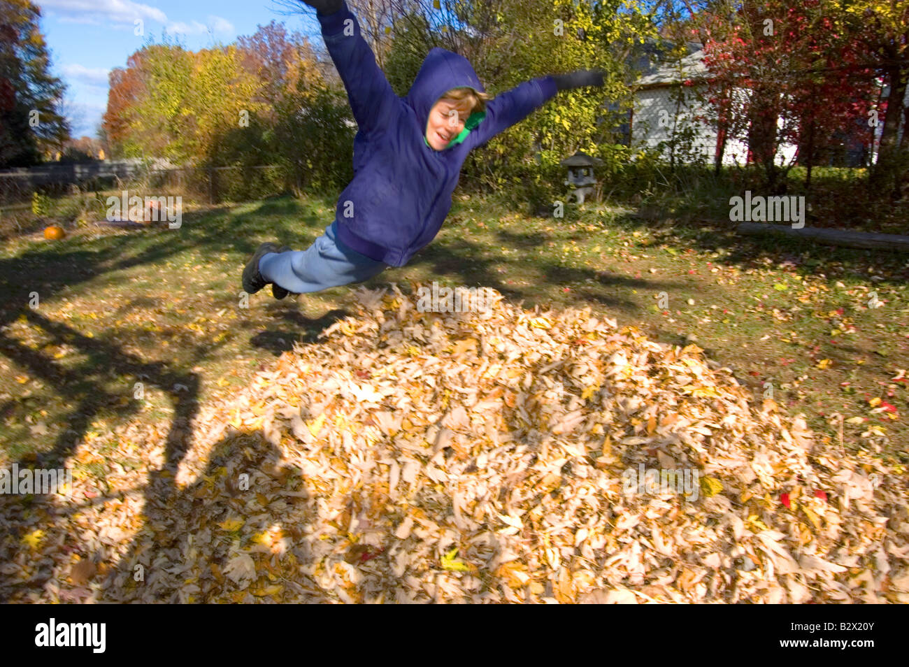 boy jumping into pile of leaves stock photo royalty free image