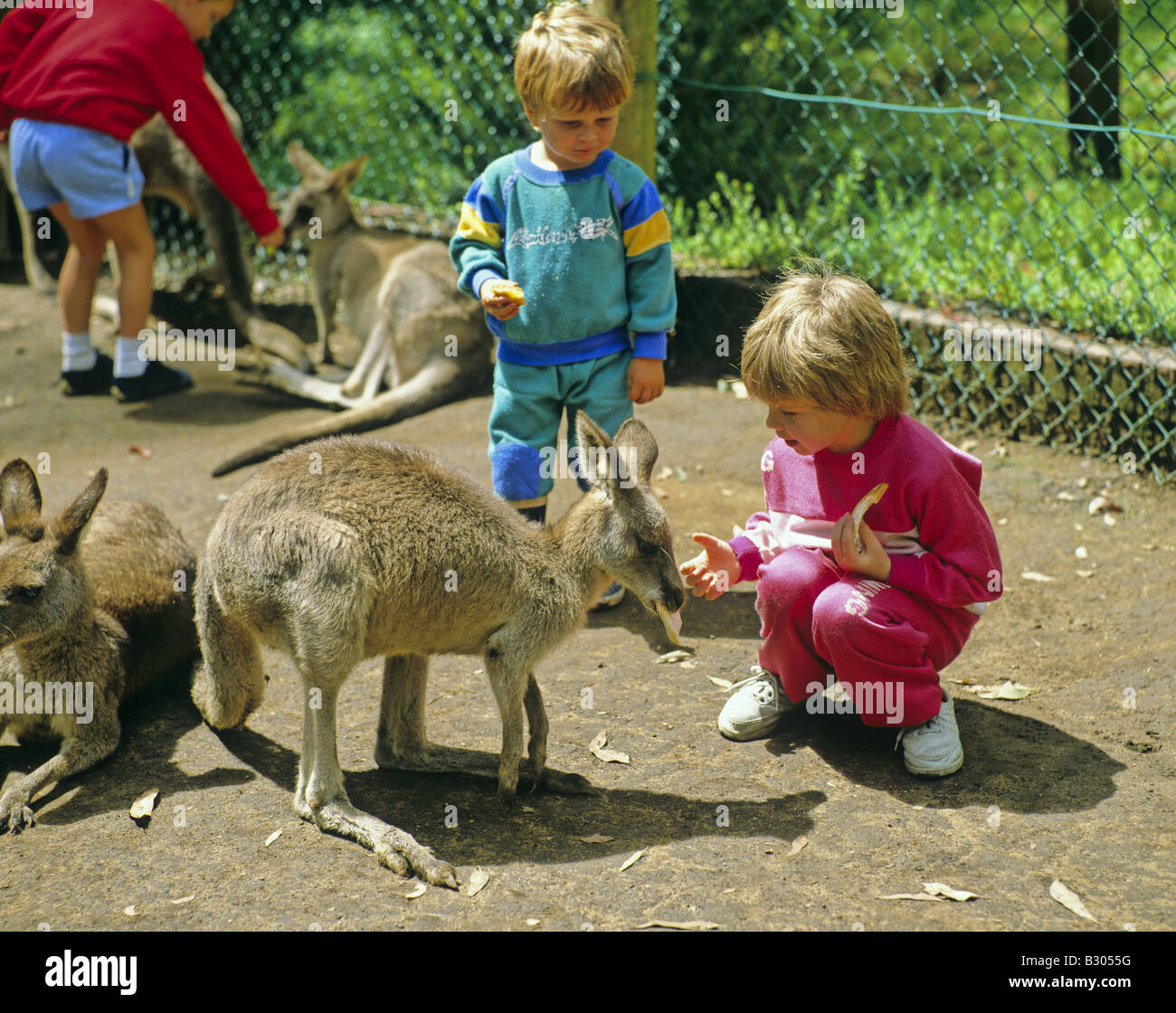 kangaroos and children at the koala park sydney new south. Black Bedroom Furniture Sets. Home Design Ideas