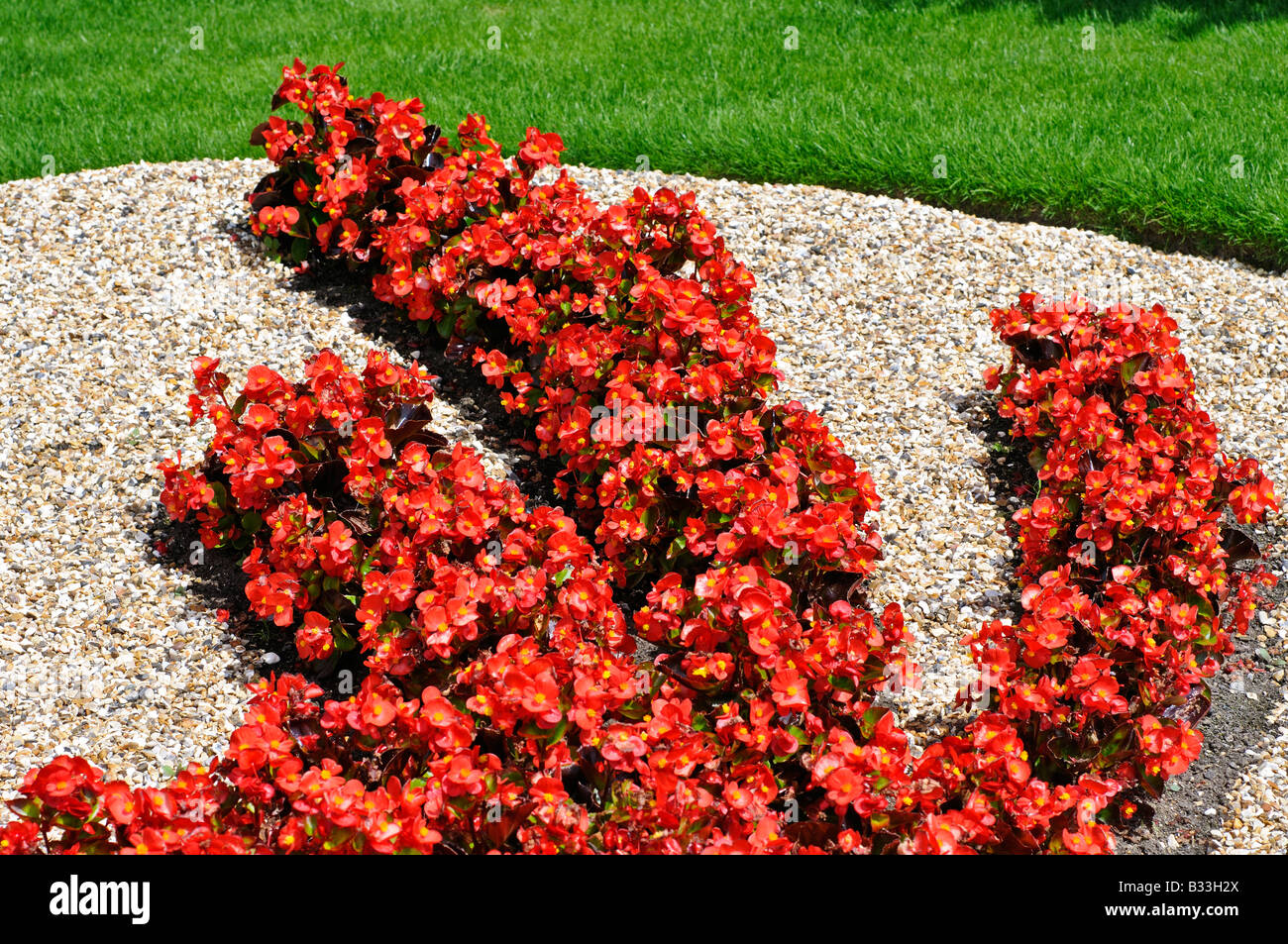 flower bed in the shape of the chinese dragon made of begonia