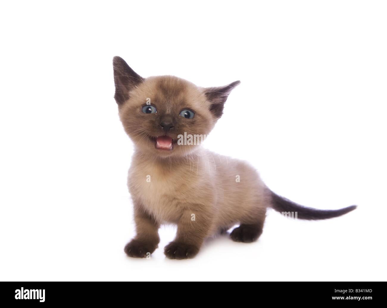cat ear costumes
