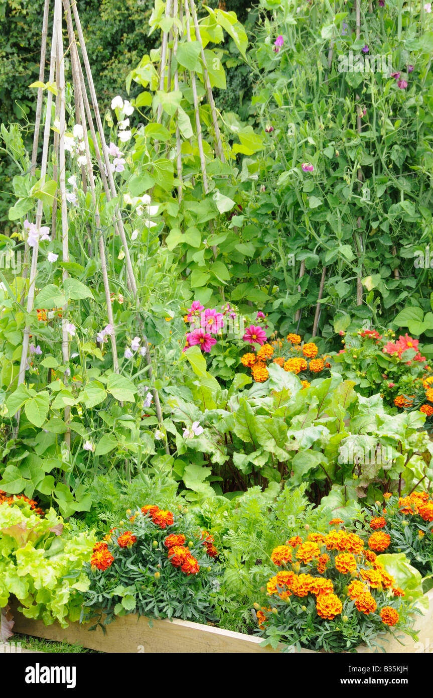 summer garden with mixed vegetable and flower raised beds
