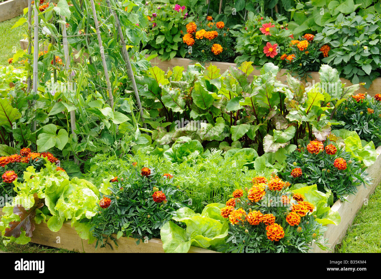 summer garden with mixed vegetable and flower potager