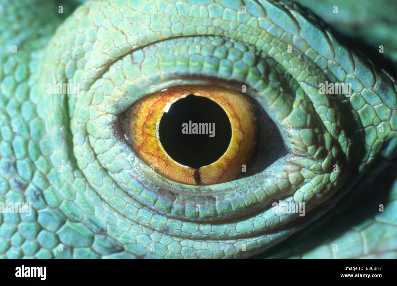 Lizard&#39-s eye | Dragon References | Pinterest | Lizards, Eye Color ...