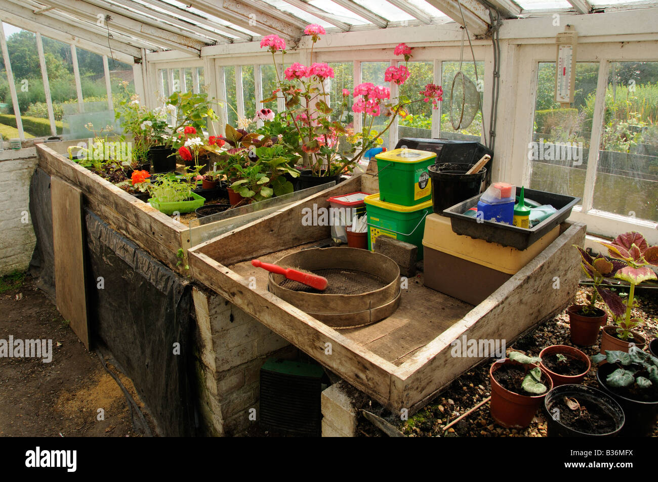 Potting Bench Potting Bench In Large Traditional Wooden Greenhouse Uk July Stock