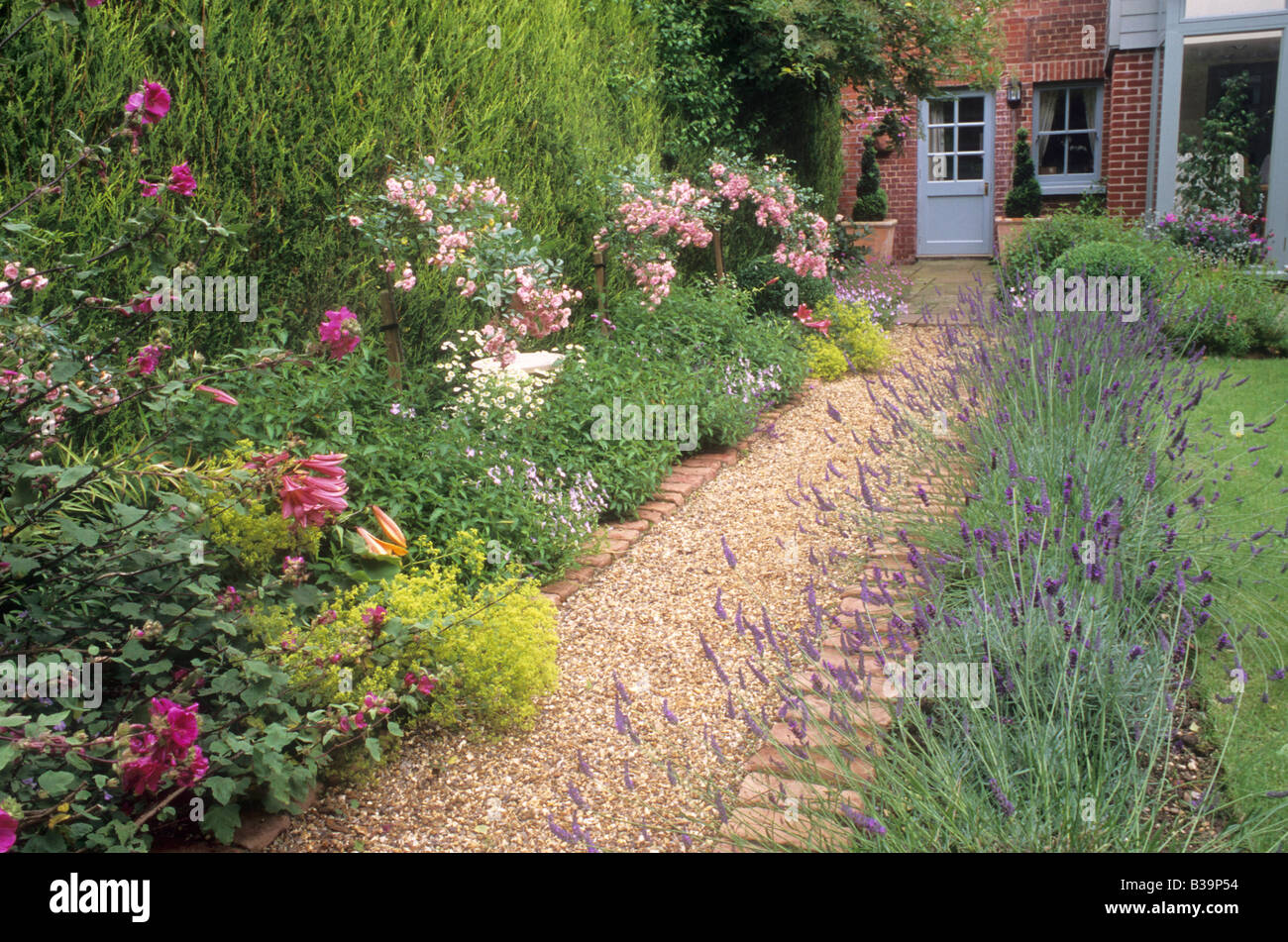 Brick and Gravel Path borders with Lavender Rosa The Fairy rose