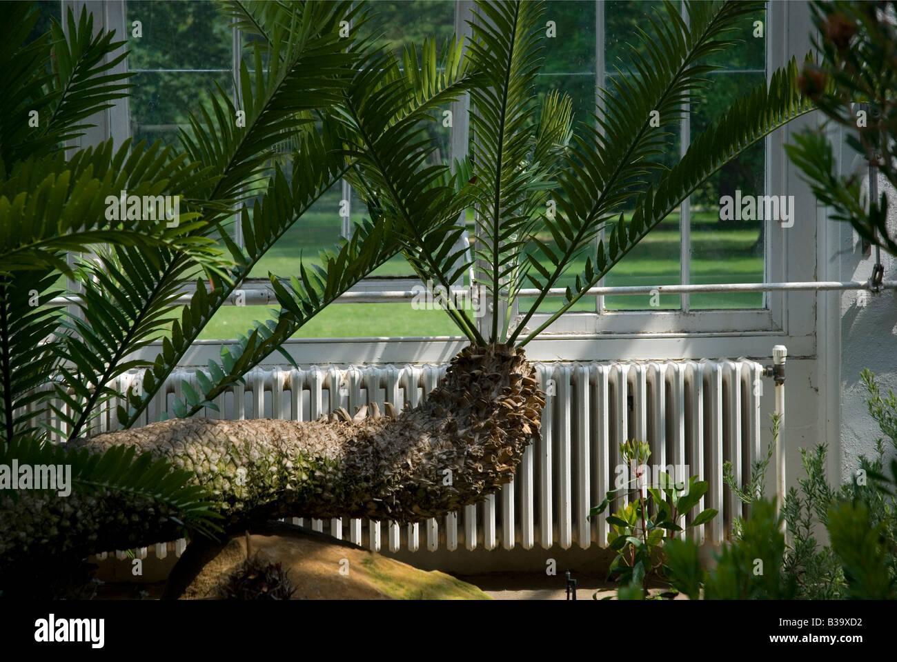 london temperate house in kew gardens