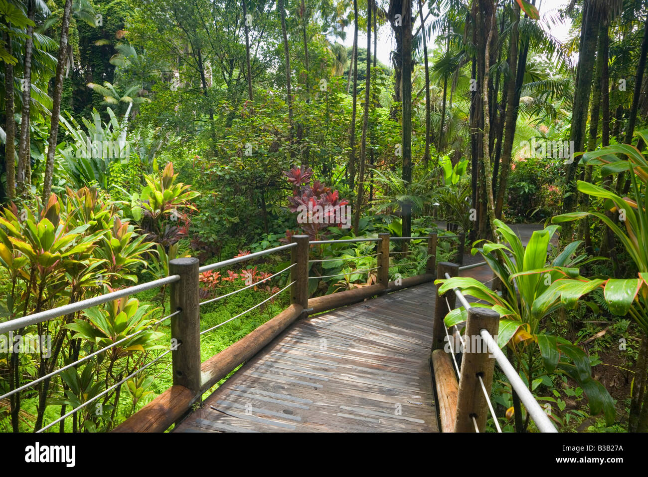 Merveilleux Boardwalk Through Hawaii Tropical Botanical Gardens Near Hilo Big Island  Hawaii USA