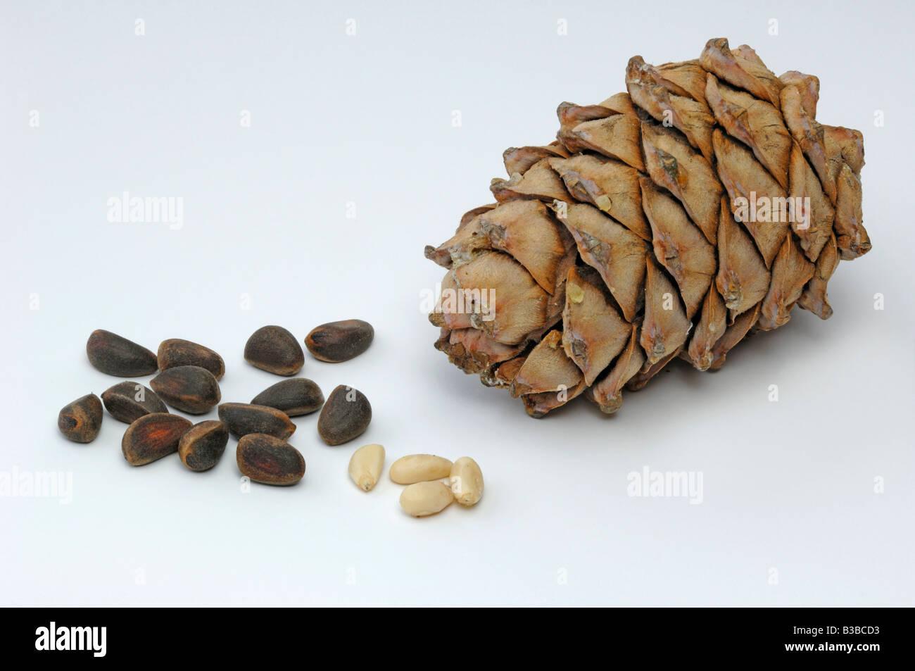 Как вырастить дальневосточный кедр из орешка в домашних условиях