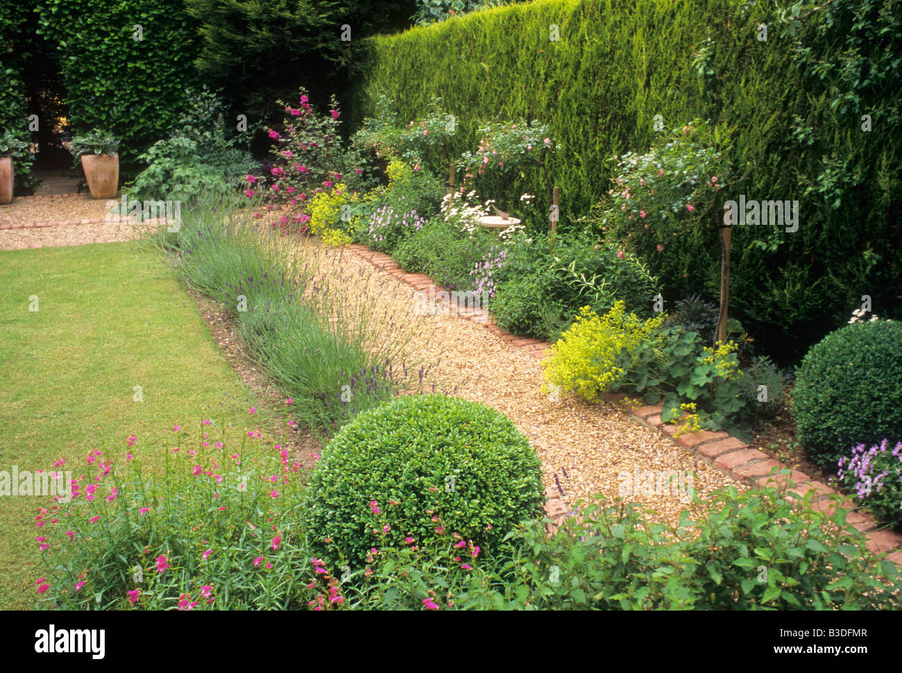 Brick and gravel path hedge lawn Rosa The Fairy rose roses small