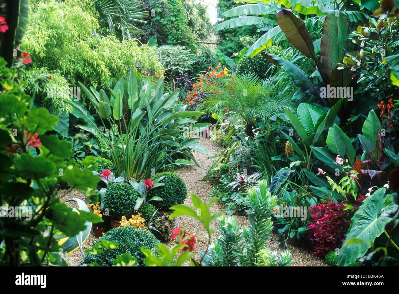 Beautiful Uk Tropical Plants Part - 12: Exotic Planting Tropical Style Garden Banana Plant England UK Musa Plants  Flowers