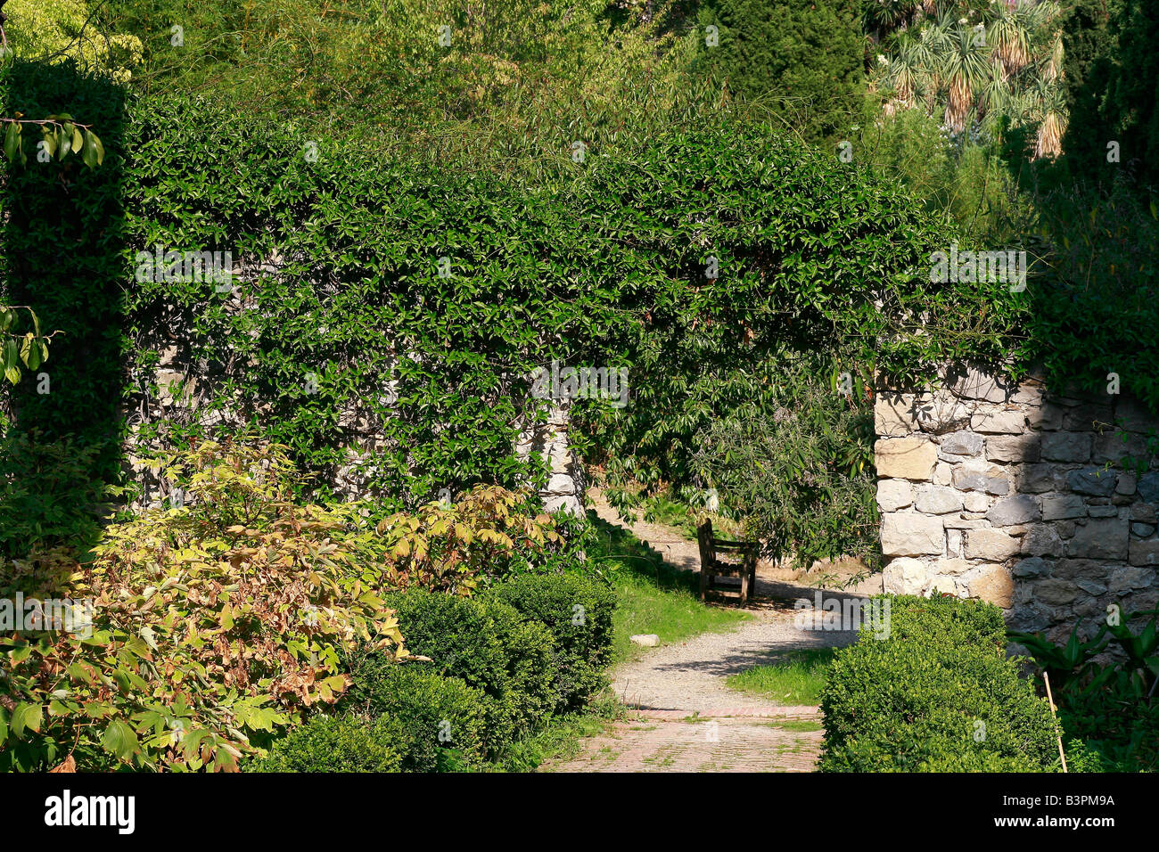 Hedera helix giardini hanbury ventimiglia ligury italy for Giardino hanbury