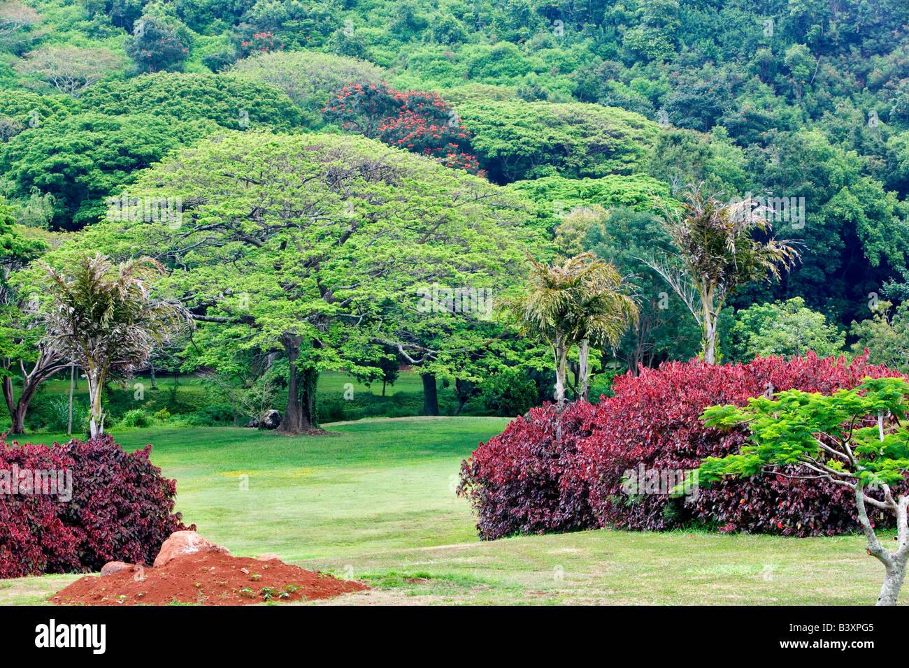 View Of National Tropical Botanical Garden Kauai Hawaii