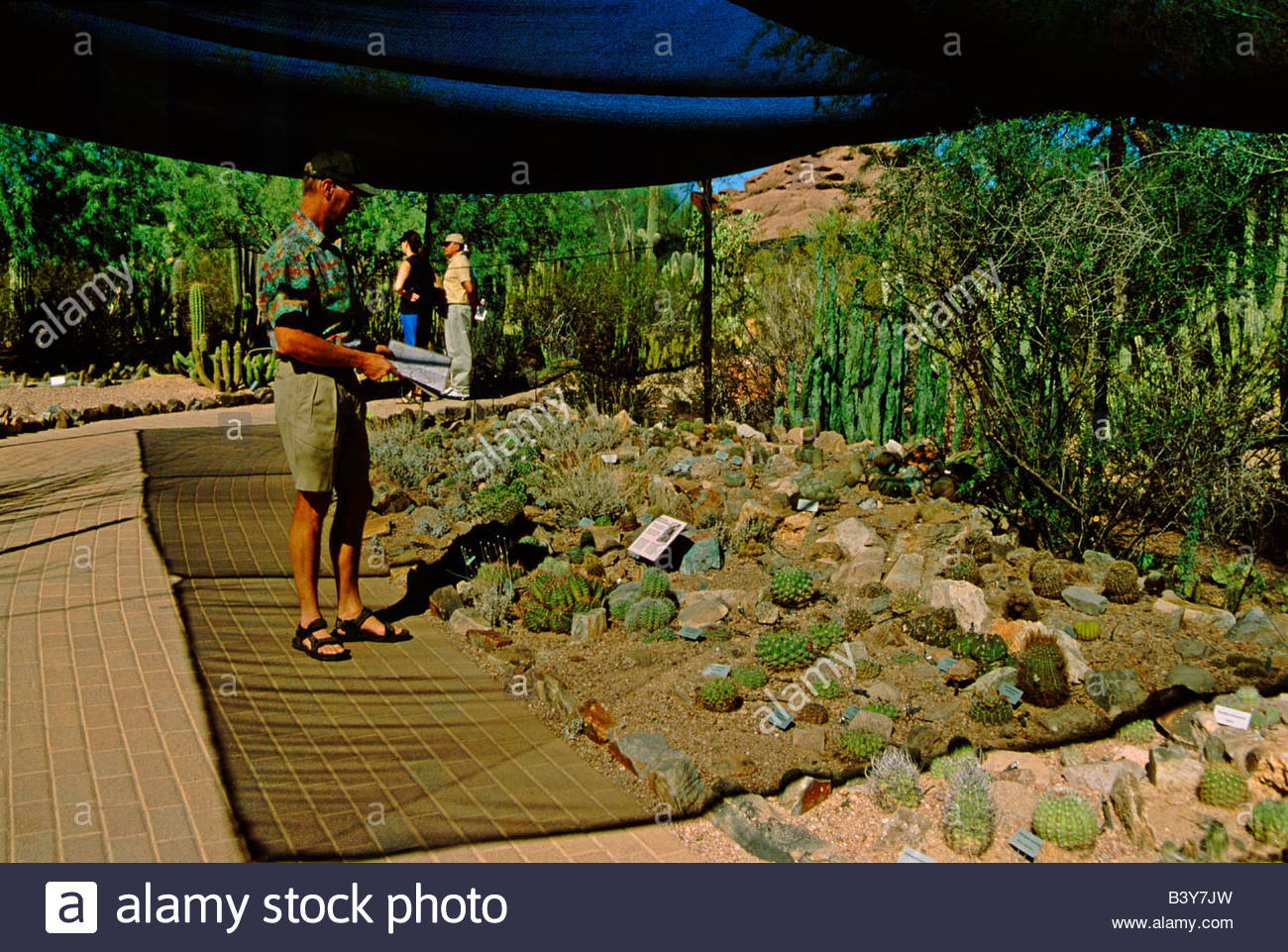 North America, USA, Arizona, Phoenix. Desert Botanical Garden, Cactus Garden.  Model Released