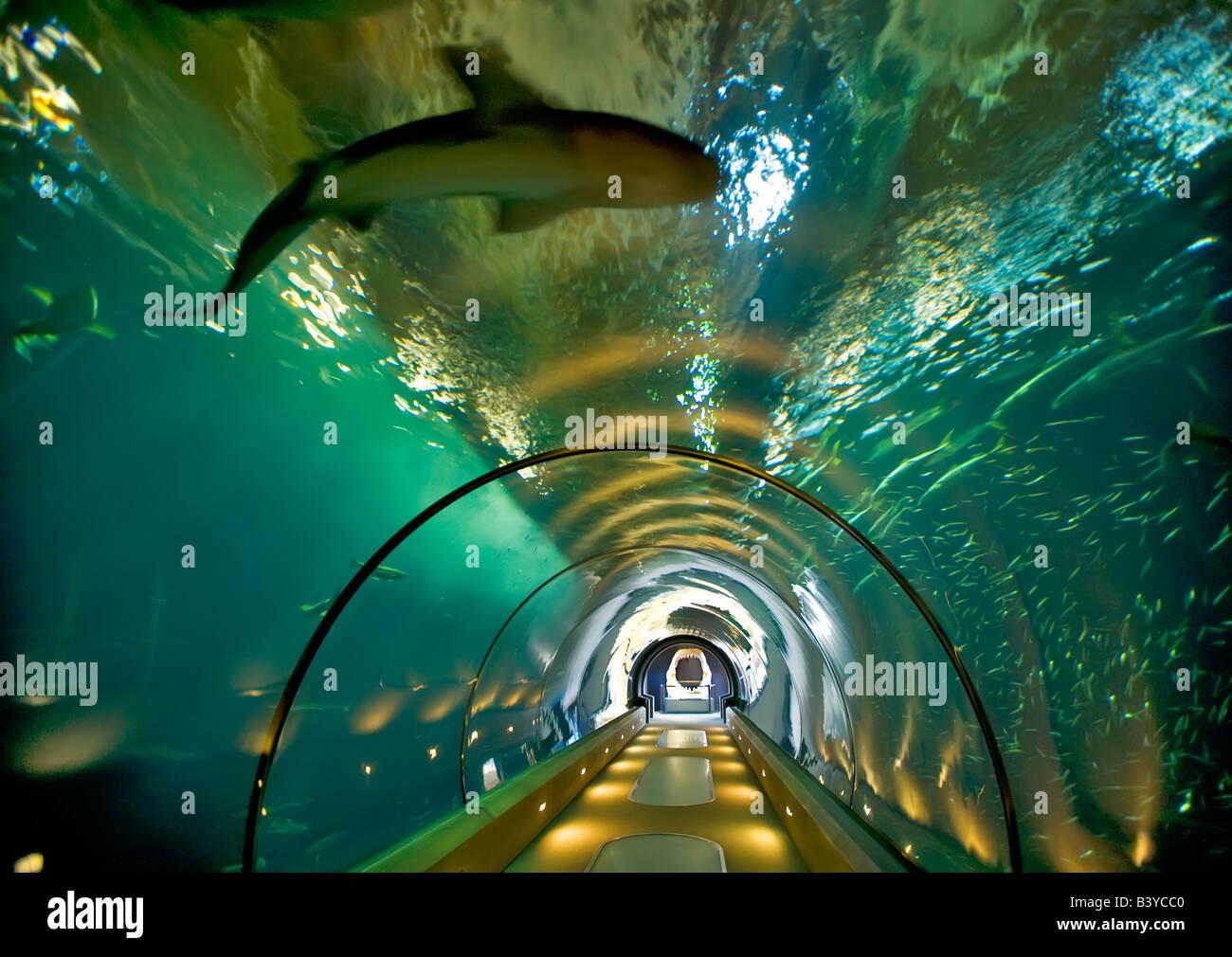 Image Gallery Newport Aquarium Oregon