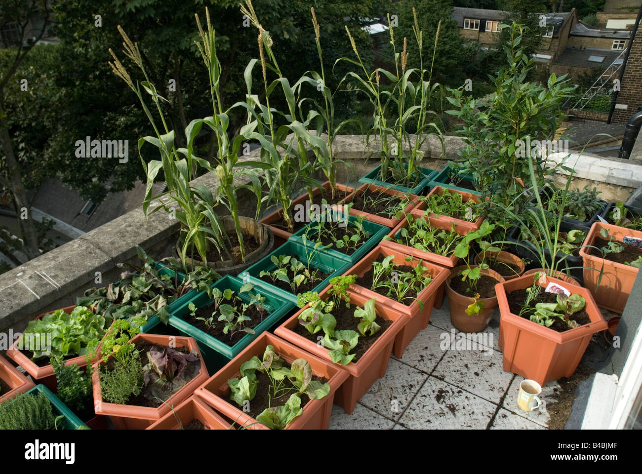 Stock Photo   Vegetables And Salads Growing In Plastic Pots On Rooftop  Urban Vegetable Garden London
