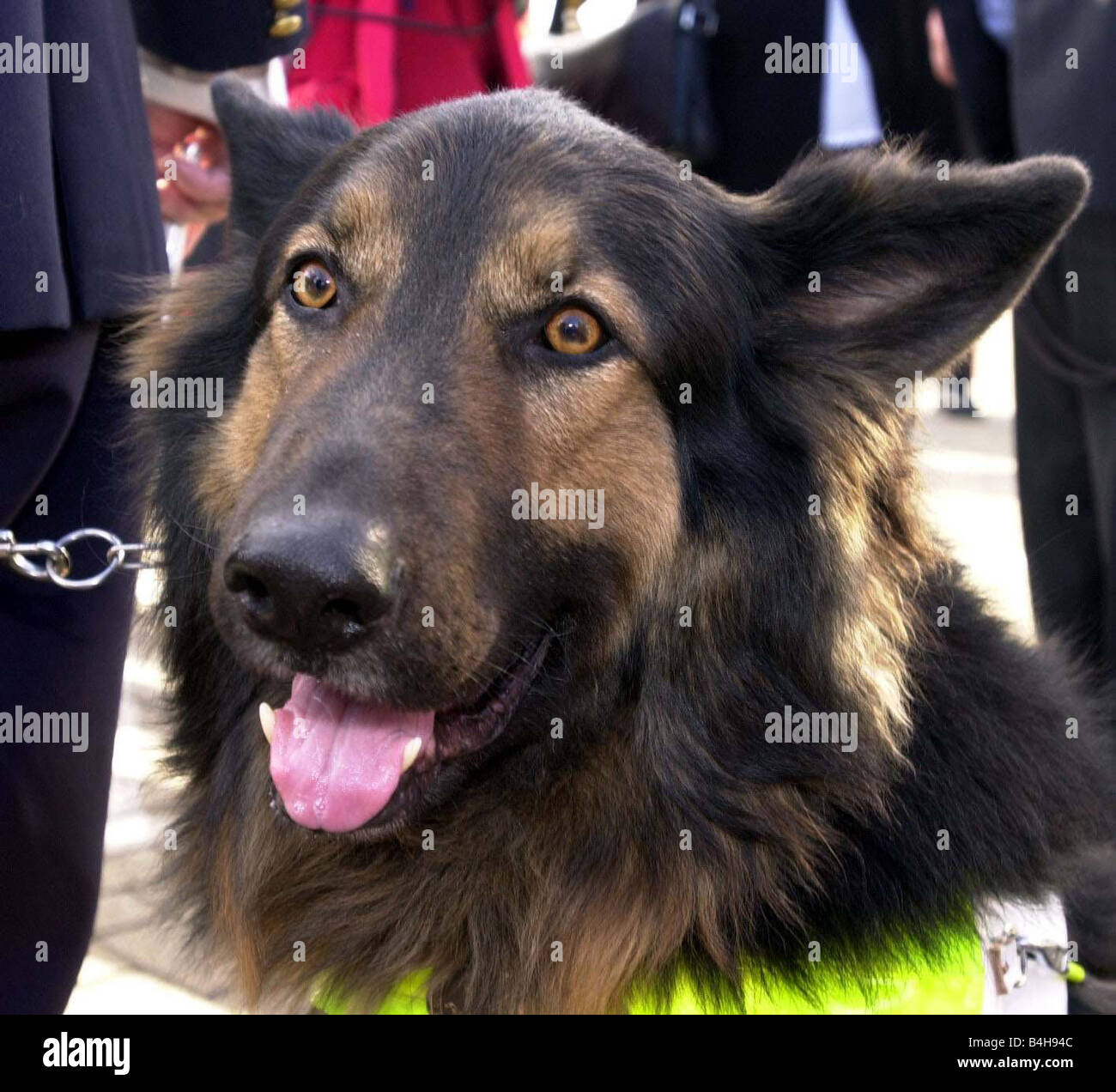 Passport Stamps How To Get First Dog To Enter Britain Under The Pets  Passport Scheme Aden An Alsation A Guide Dog