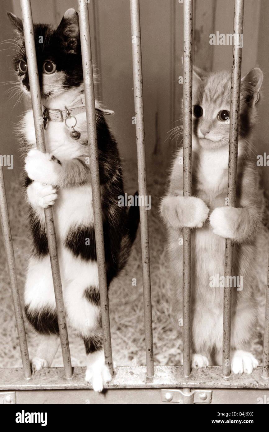 Картинки по запросу коты в клетке