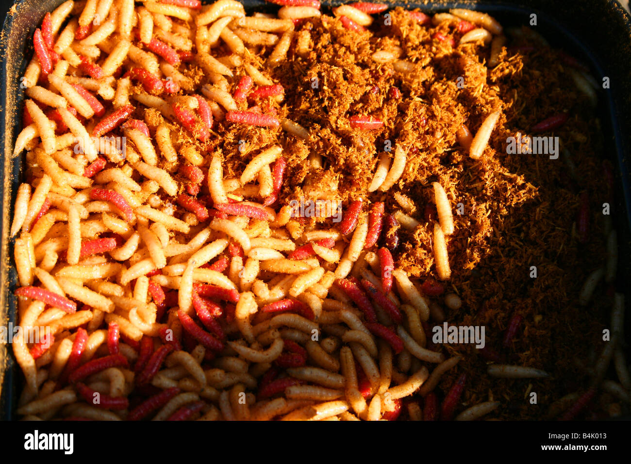Maggots On Kitchen Floor Maggots And Flies Stock Photos Maggots And Flies Stock Images