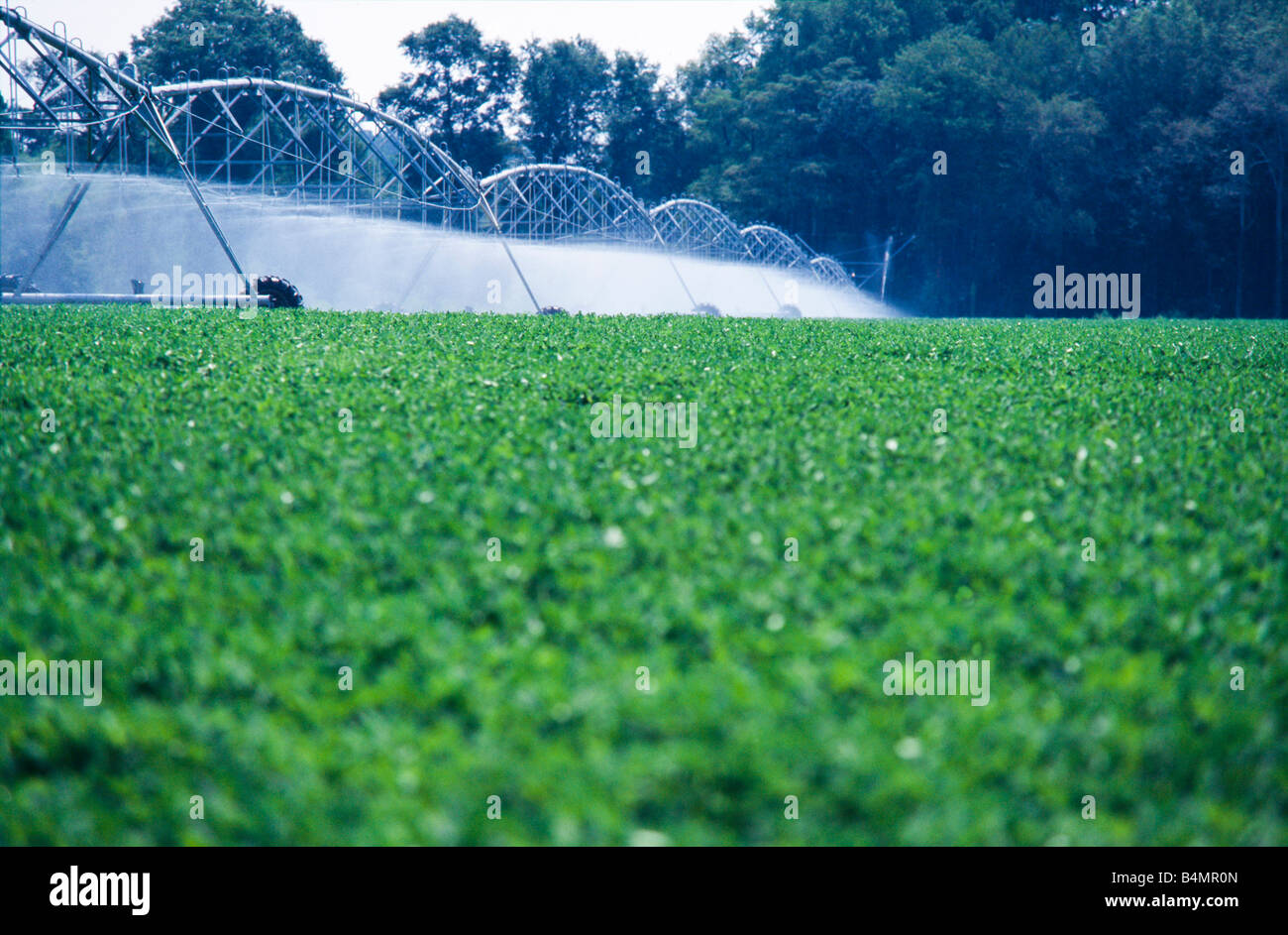 Irrigation Of Farm Fields, With Rows Of Crops, Georgia Stock Photo ...