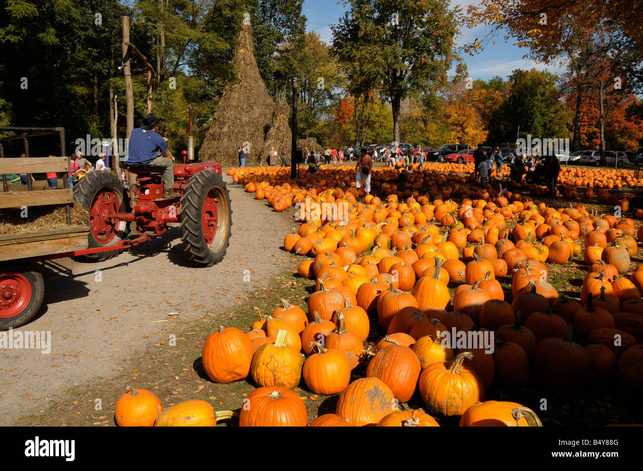 halloween pumpkin sale at farm market ny state usa tractor hayride - Farm Halloween
